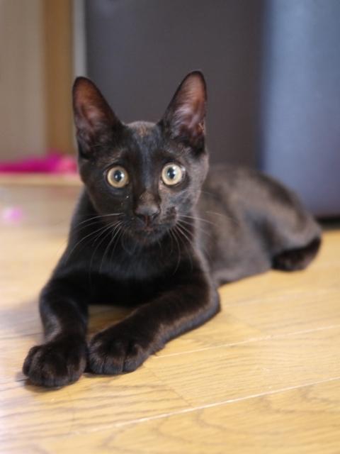 猫のお留守番 ぎねすくん編。_a0143140_20401510.jpg