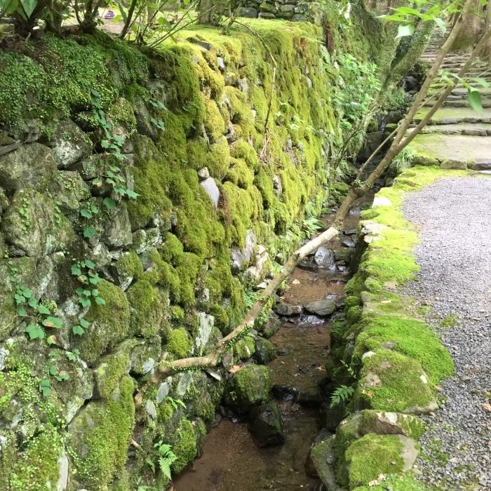 高山寺  ②緑と苔と_d0105967_12373676.jpg