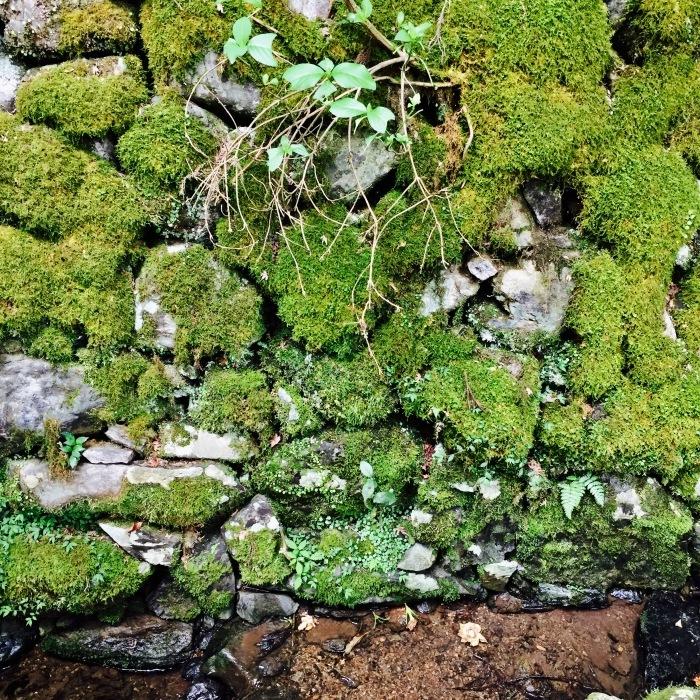 高山寺  ②緑と苔と_d0105967_12442398.jpg