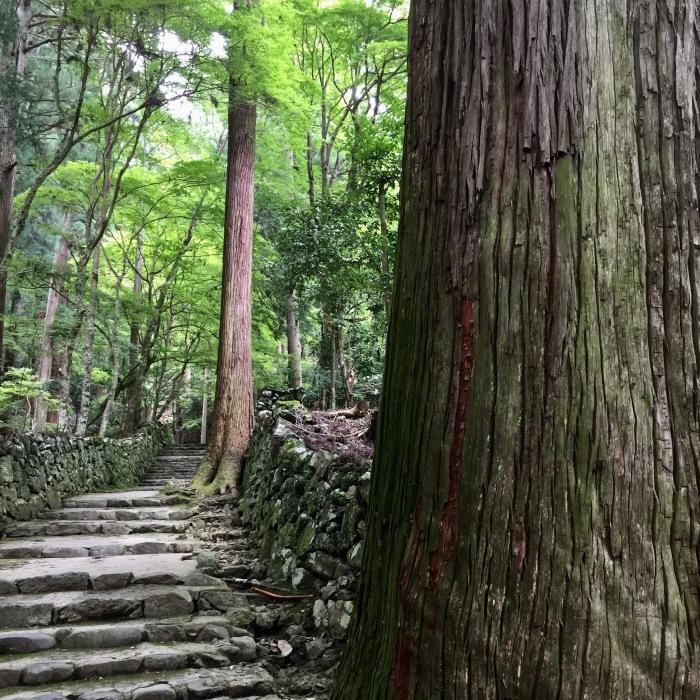 高山寺  ②緑と苔と_d0105967_12513838.jpg