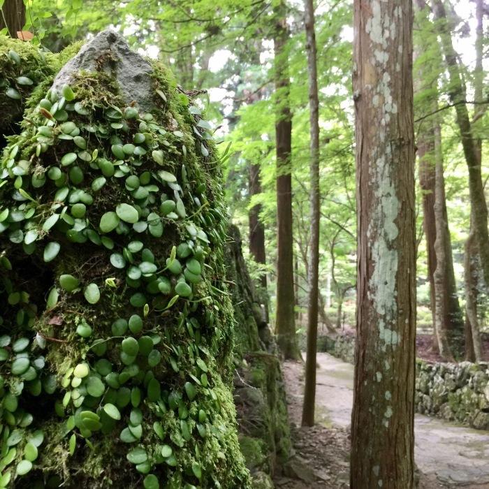 高山寺  ②緑と苔と_d0105967_12543478.jpg