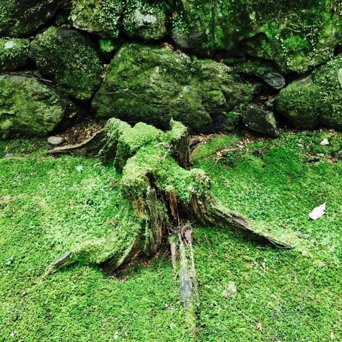 高山寺  ②緑と苔と_d0105967_13041789.jpg