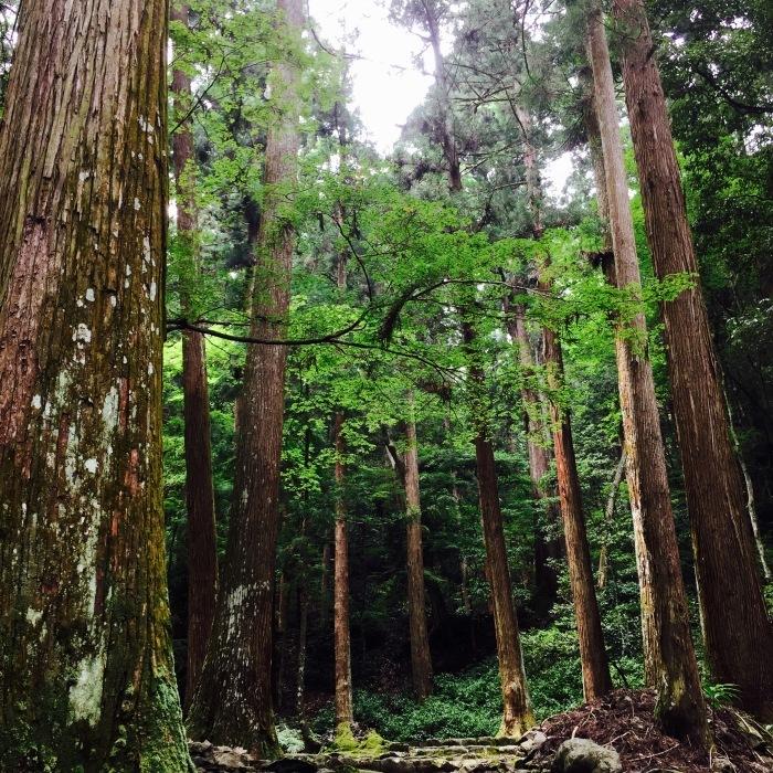 高山寺  ②緑と苔と_d0105967_13090676.jpg