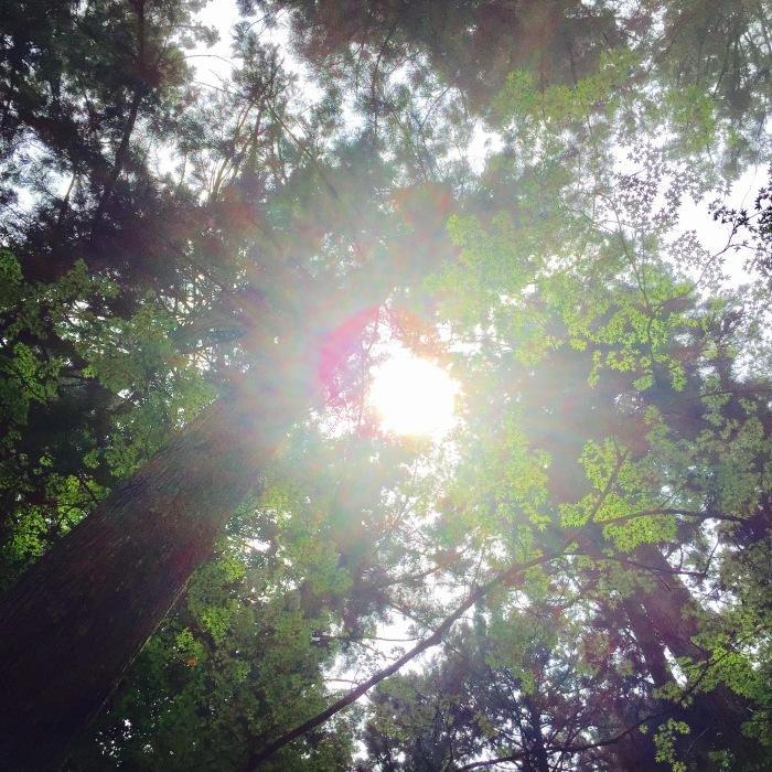高山寺  ②緑と苔と_d0105967_13254399.jpg