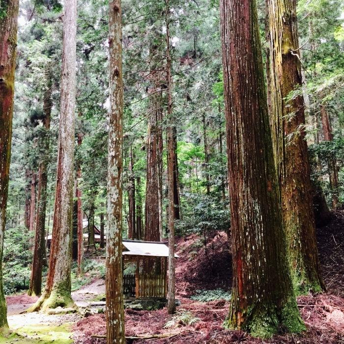 高山寺  ②緑と苔と_d0105967_13324180.jpg