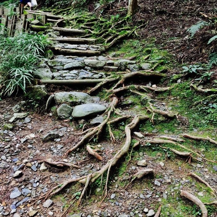 高山寺  ②緑と苔と_d0105967_13501092.jpg