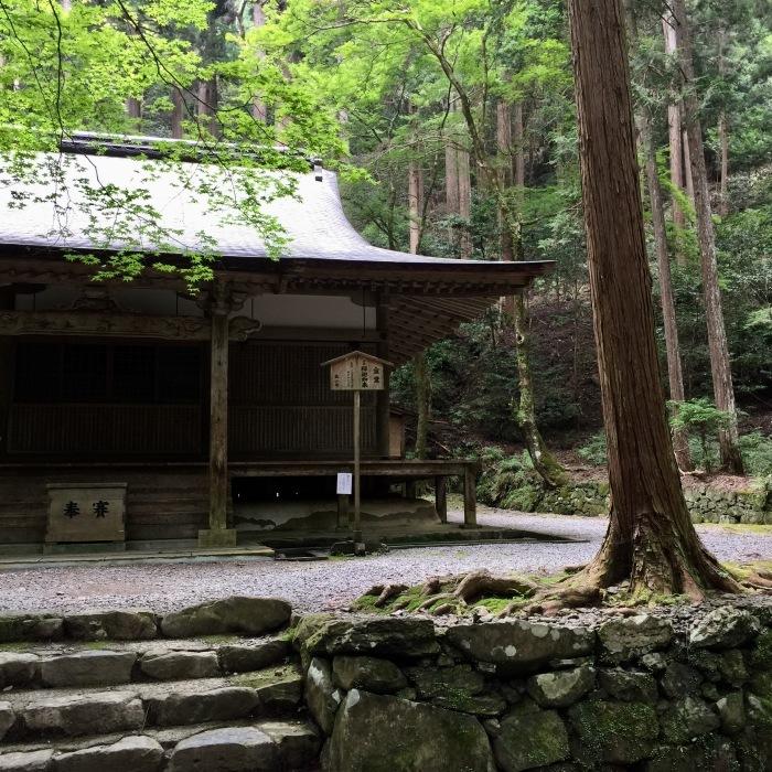 高山寺  ②緑と苔と_d0105967_13591002.jpg