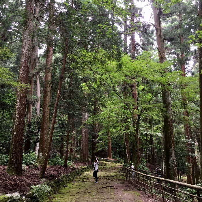 高山寺  ②緑と苔と_d0105967_15481379.jpg