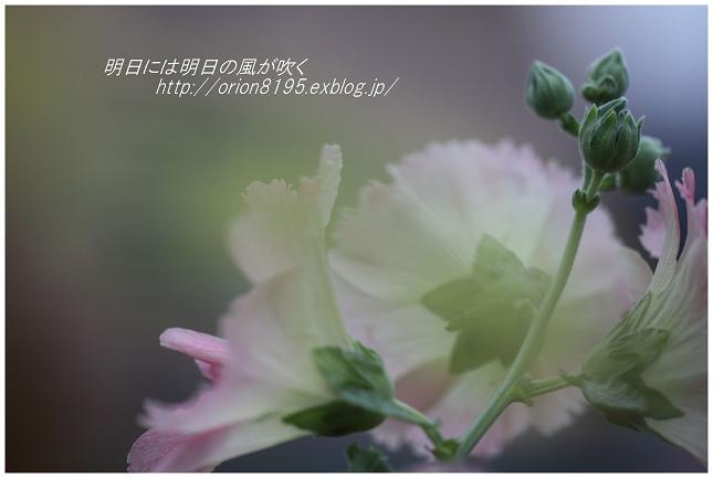f0361079_20593762.jpg