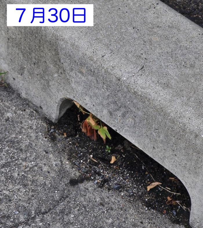 d0006690_1824186.jpg