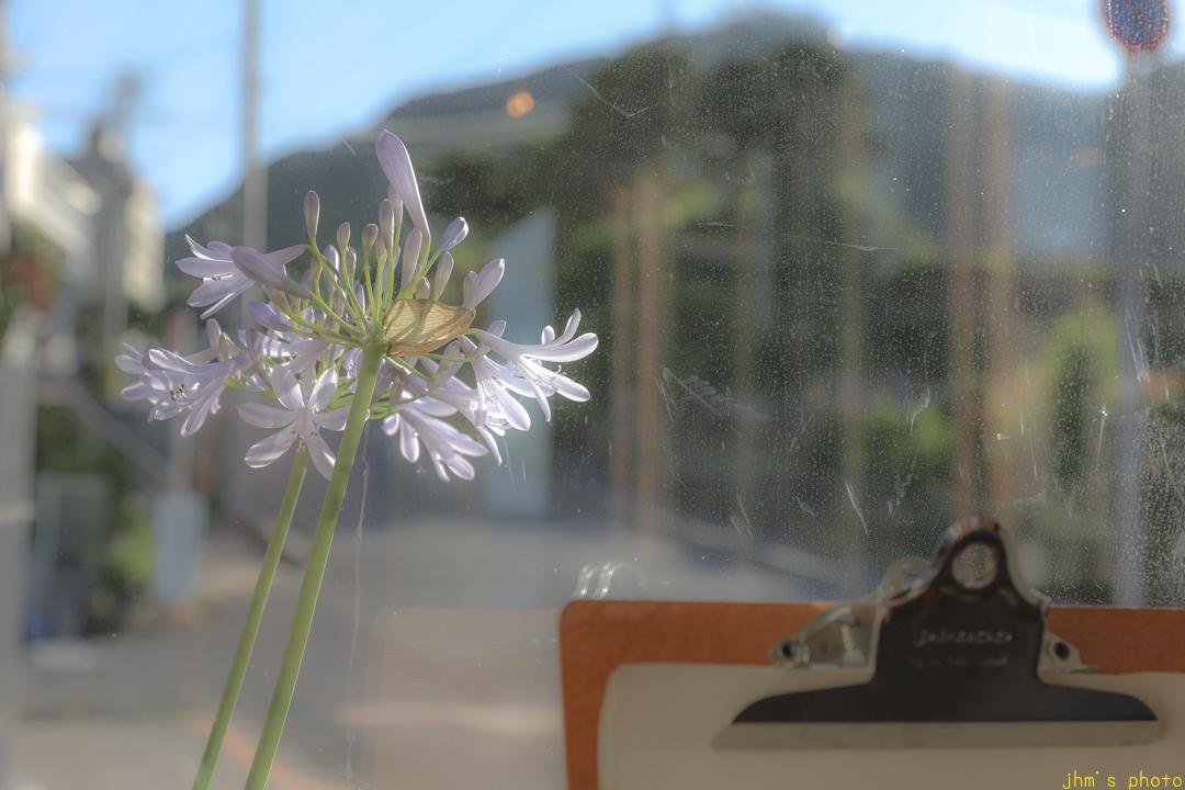 窓べりの花とその影を映す斜陽_a0158797_00534128.jpg