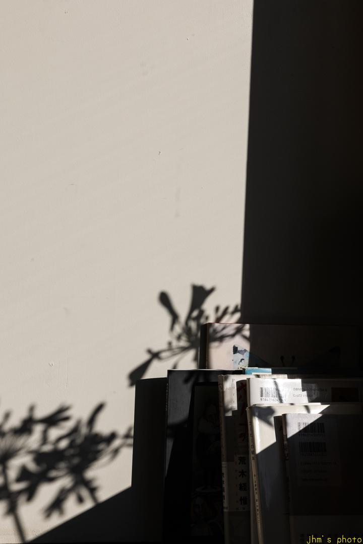 窓べりの花とその影を映す斜陽_a0158797_00542776.jpg