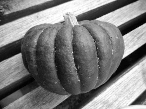 日本かぼちゃ小菊_f0192307_19503820.jpg