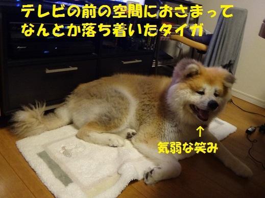f0121712_15183530.jpg