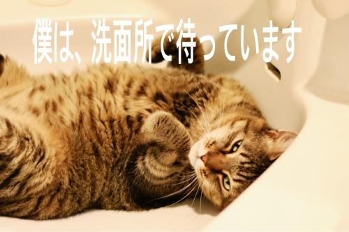 にゃんこ劇場「僕、待ってるよー」_c0366722_17190814.jpg