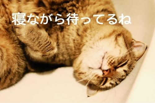 にゃんこ劇場「僕、待ってるよー」_c0366722_17195514.jpg