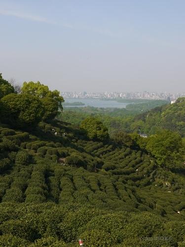 【ご案内】CT-AI主催のセミナー「中国茶の国際事情と浙江銘茶のトレンドについて」_a0169924_21115183.jpg