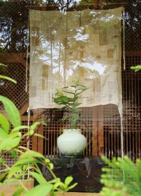 花だより タメトモユリ_a0279848_12453905.jpg