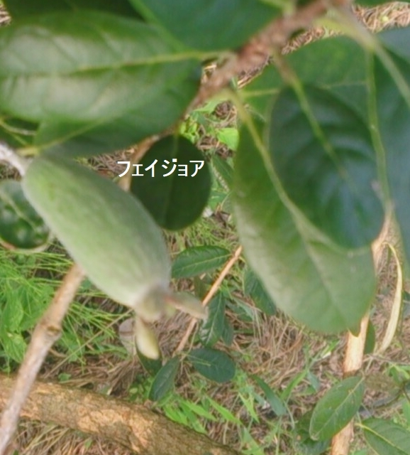 b0045259_19585947.jpg