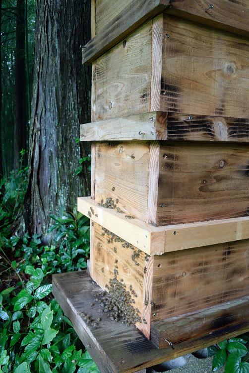 日本ミツバチの蜜採取_d0231263_23262070.jpg