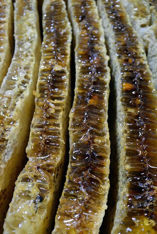 日本ミツバチの蜜採取_d0231263_23264880.jpg