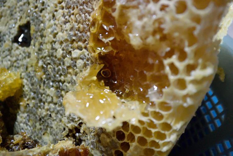 日本ミツバチの蜜採取_d0231263_23271547.jpg