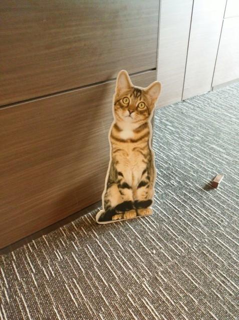 猫の集会_e0367571_19263141.jpg