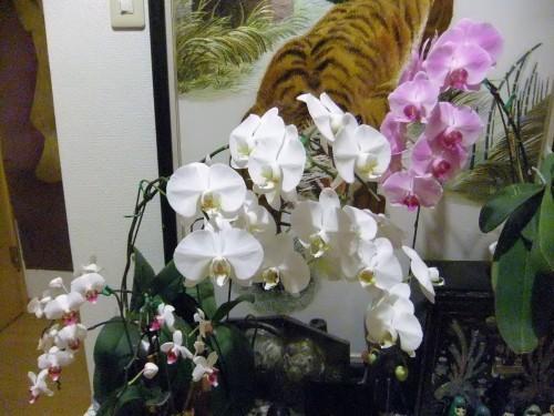 花と友と_f0253572_19554918.jpg
