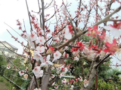 花と友と_f0253572_20055824.jpg