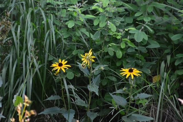 7月20-31日の庭。_c0124100_16065398.jpg