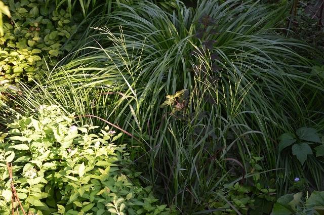 7月20-31日の庭。_c0124100_16065706.jpg
