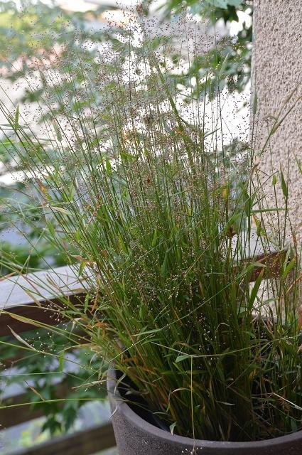 7月20-31日の庭。_c0124100_16070829.jpg