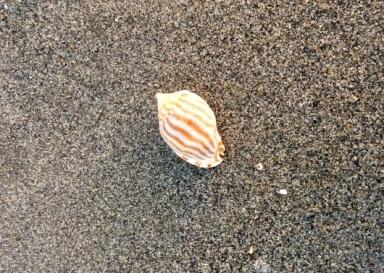 美しい貝殻 ☆ 海の光_c0203401_09595727.jpg