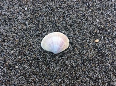 美しい貝殻 ☆ 海の光_c0203401_10005498.jpg