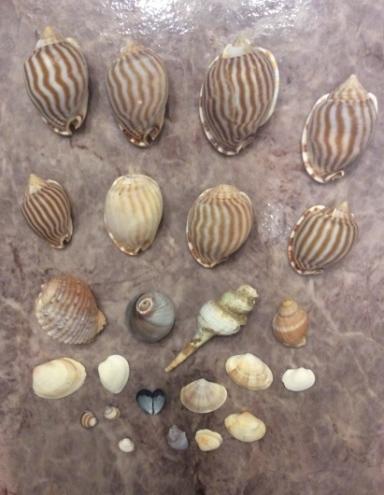 美しい貝殻 ☆ 海の光_c0203401_18252771.jpg