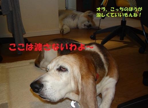f0121712_21552694.jpg