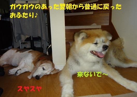 f0121712_22261057.jpg