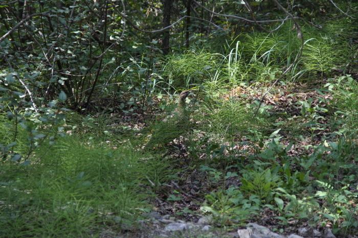 鈴木様 Lake O\'Hara と Shadow Lake Lodgeの旅_d0112928_16471584.jpg