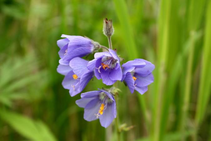 釧路湿原国立公園誕生30周年 7月31日_f0113639_18255911.jpg
