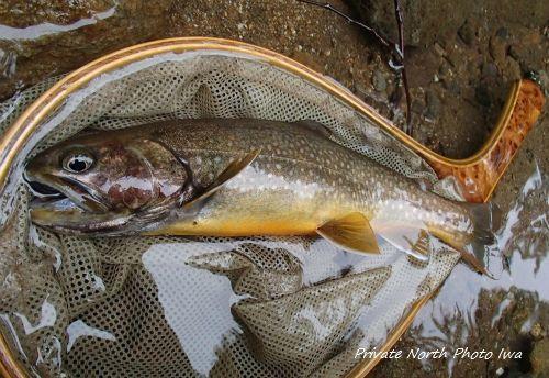 昨日の釣り_d0261148_12512900.jpg