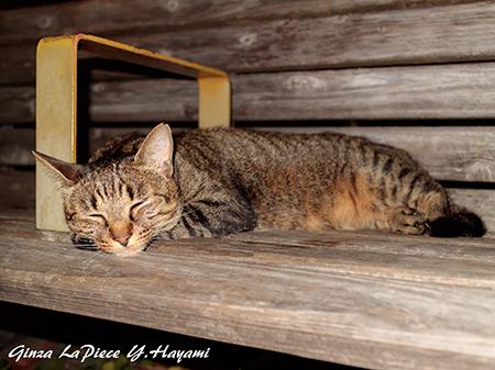 猫のいる風景 オヤスミ中のキジトラちゃん_b0133053_01322711.jpg