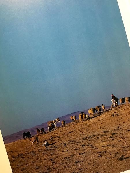 ARAB シリアの砂漠に生きる家族_a0087957_00375685.jpg