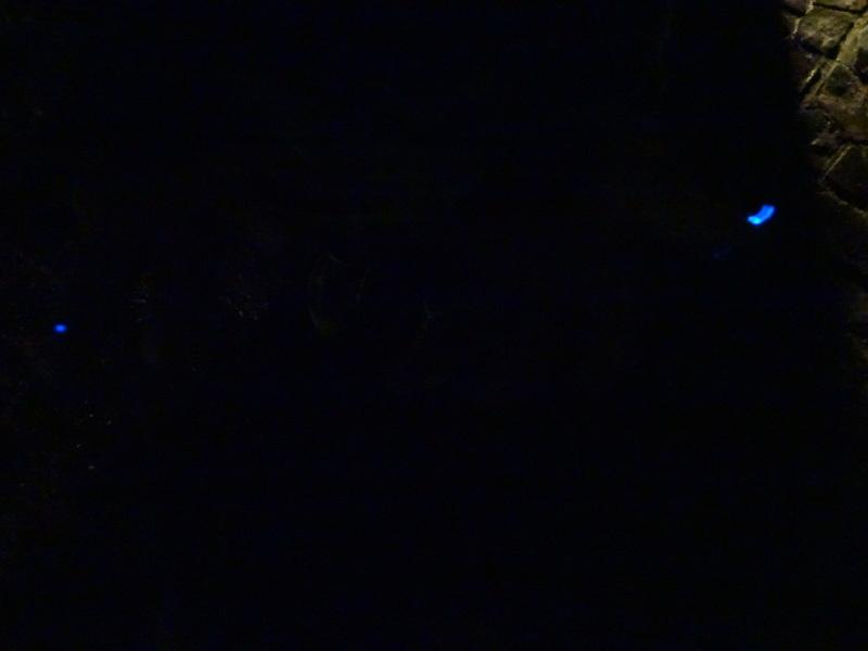 ZooCan企画「ウミホタル観察&カブトムシ探し_c0108460_00423417.jpg