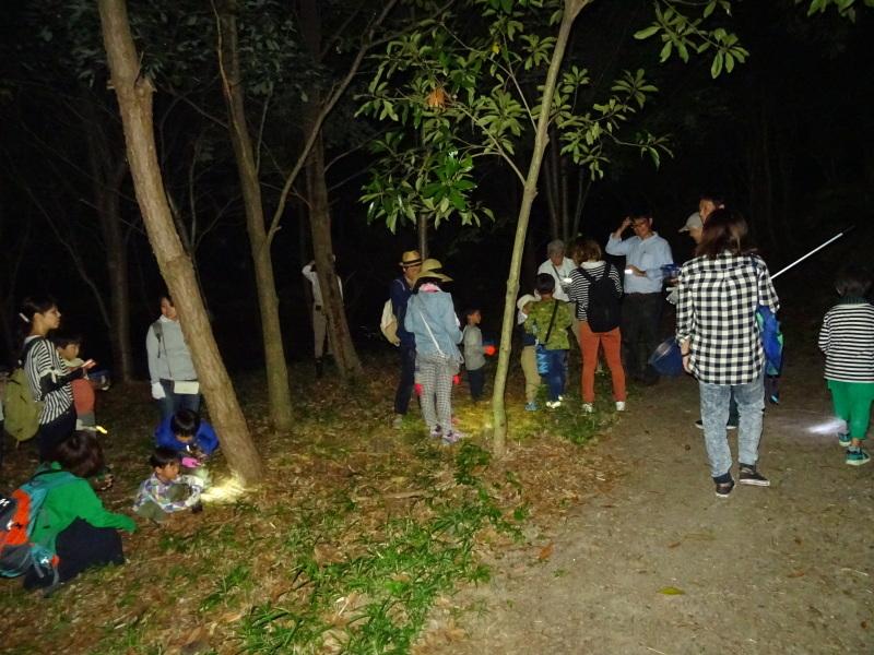 ZooCan企画「ウミホタル観察&カブトムシ探し_c0108460_00460044.jpg