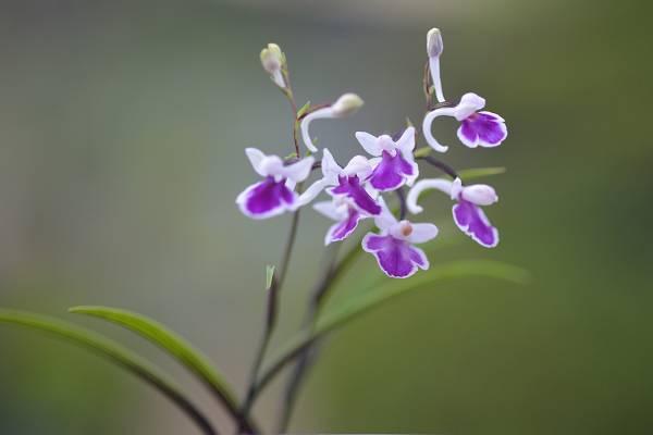 自宅の花 ⑭_b0223668_08421870.jpg
