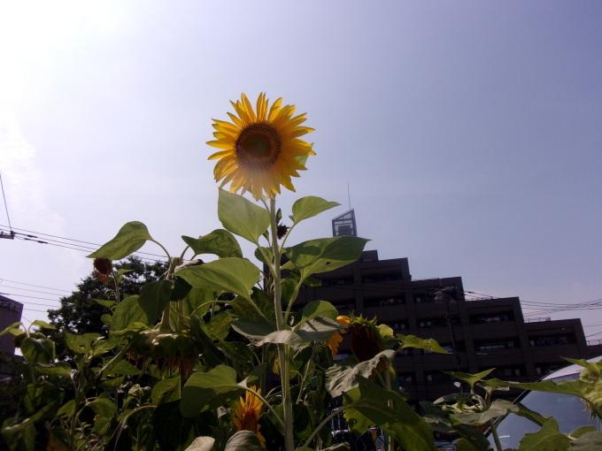 午後から、江戸川年金事務所へ・・・。_c0198869_21362478.jpg