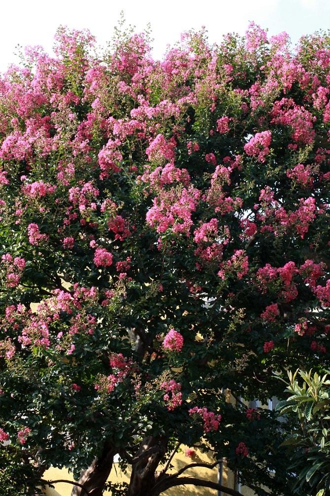 7月の終わり ~夏を告げる花々~_a0107574_18484175.jpg
