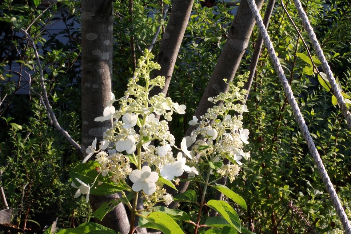 7月の終わり ~夏を告げる花々~_a0107574_18485648.jpg