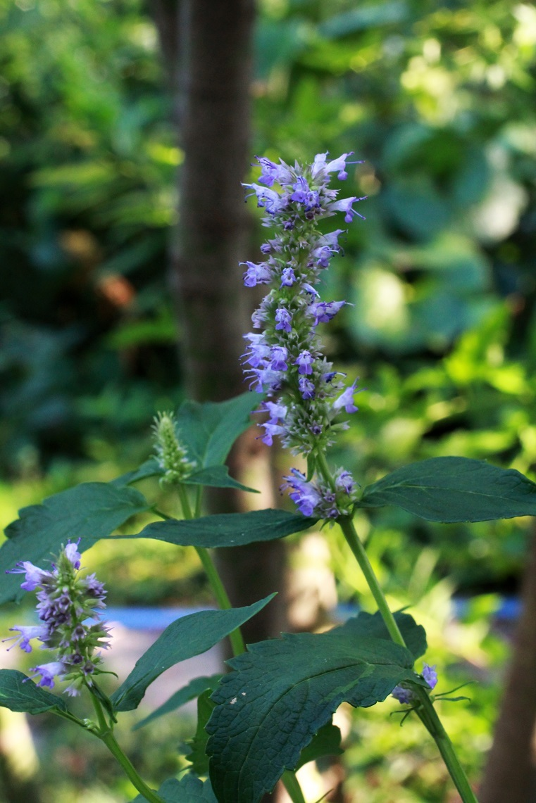 7月の終わり ~夏を告げる花々~_a0107574_18491696.jpg
