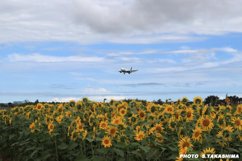 ユナイテッド航空とヒマワリ_b0368378_19513521.jpg